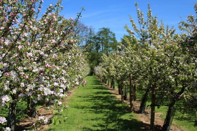 Orchard Blank.jpg